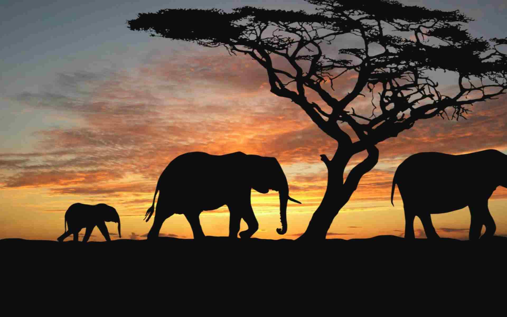 Safari en Afrique : j'ai réservé grâce à ce voyagiste génial