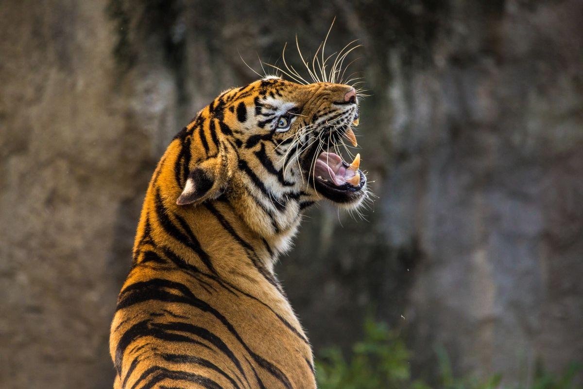 Blog animaux : recommanderiez-vous de souscrire une assurance pour les animaux de compagnie?